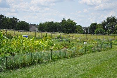 community-gardens-1