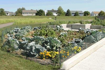 community-gardens-2
